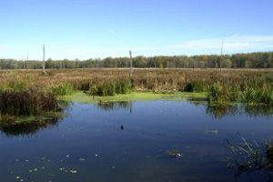 Natural Enhanced Transport of Agricultural Lead and Arsenic through Riparian Wetlands